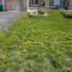 Crappy Lawn