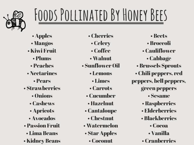 food-pollinated-by-honey-bees