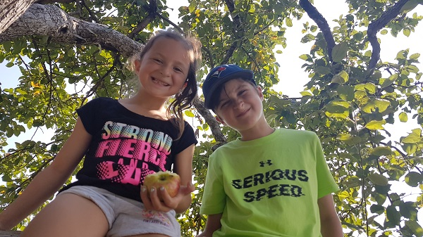Kids Apple Picking Mountain Orchards