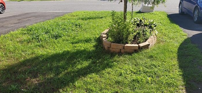 Fertilizer Canada Fix Lawn 1